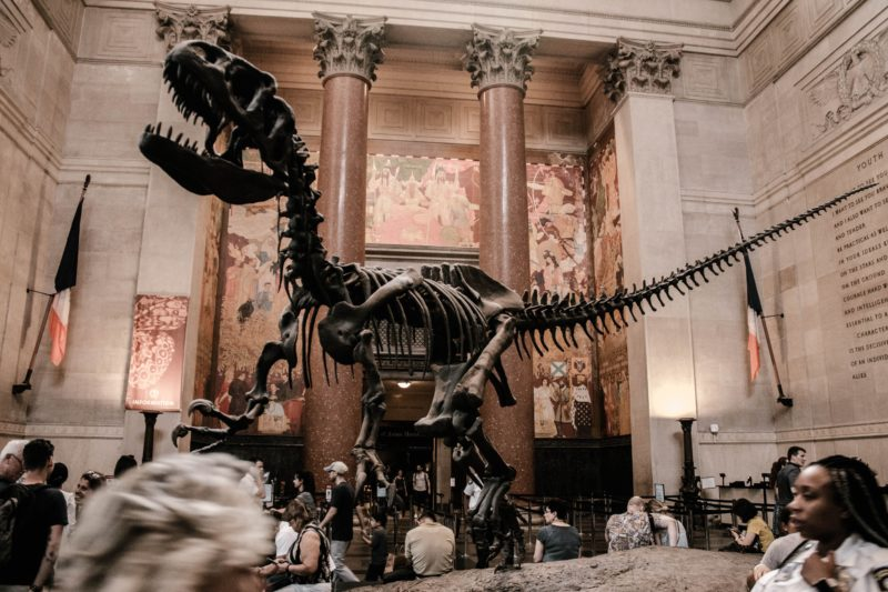 American-Museum-of-Natural-History-new-york-movie